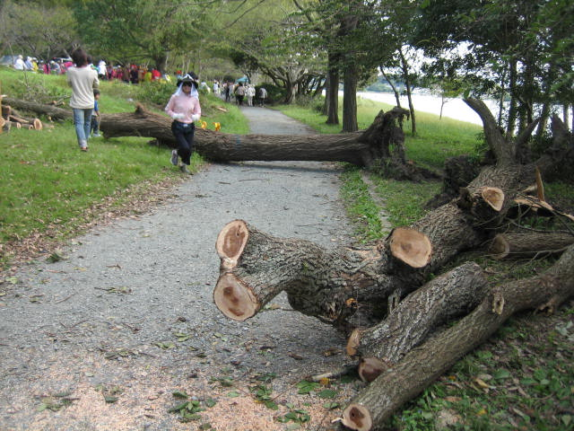typhoon 5.JPG